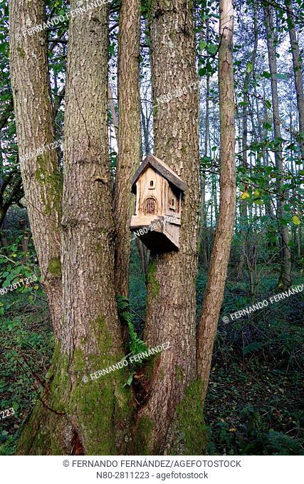 Bird house. Winkworth Arboretum. National Trust. Godalming. Surrey. England
