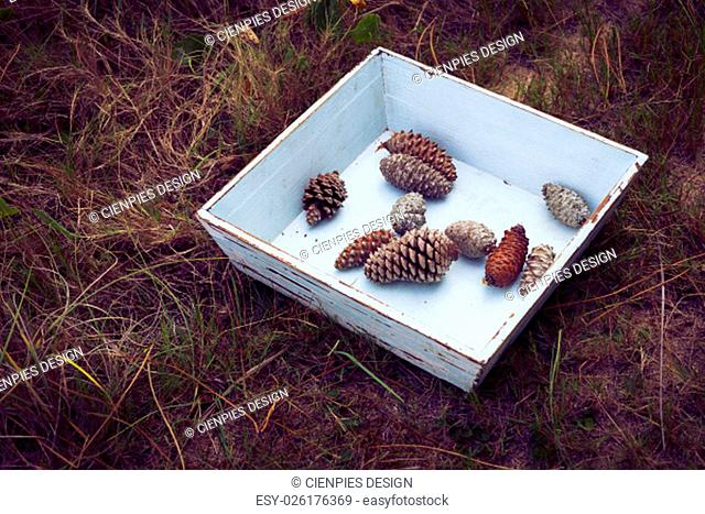 Vintage winter concept composition, grunge wood box with pine cones on wild forest grass