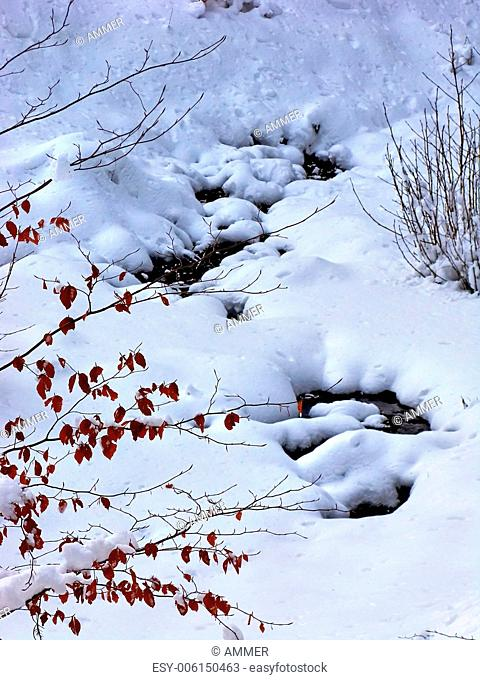 Forest creek under the snow, Drahany Highlands, Southern Moravia, Czech Republic, Central Europe
