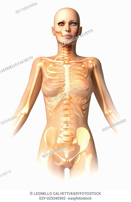 Woman body, with bone skeleton superimposed. With clipping path included. Anatomy image