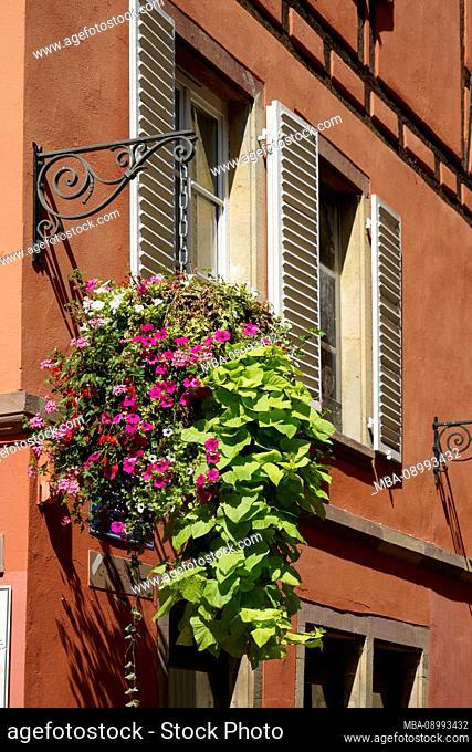 France, Alsace, Strasbourg, house, old building, red facade, window, floral decoration, detail