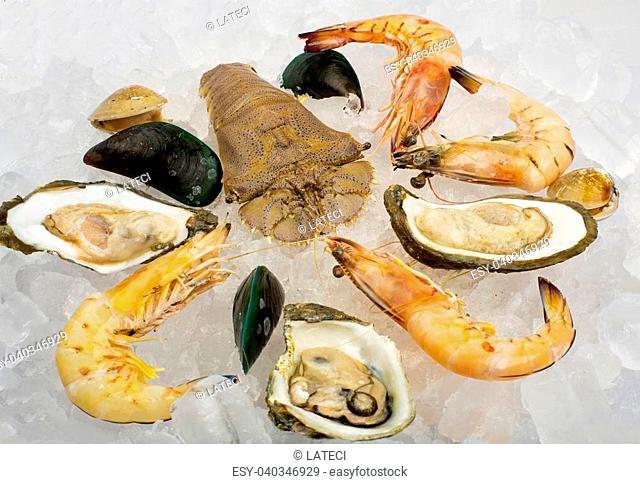 Seafood. Prepared Shellfish on Ice.Mediterranean