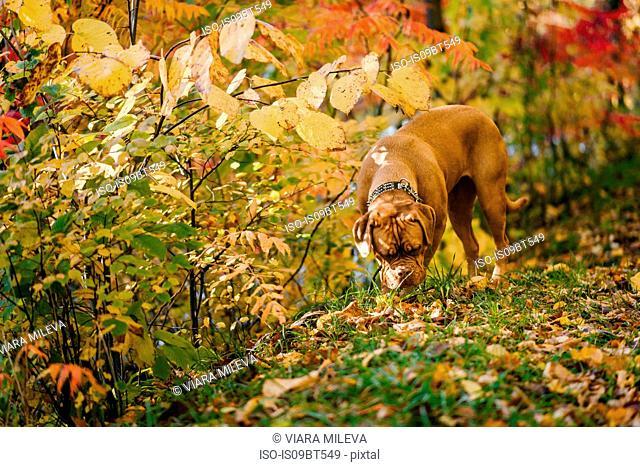 Dog exploring park alone
