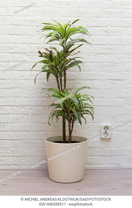 Large plant next to a white brick wall