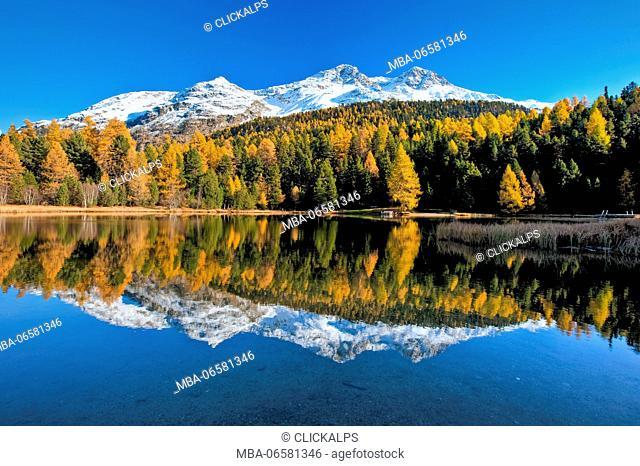 Autumn mirrored in the calm waters of Lej Marsch in the Upper Engadine, Saint Moritz, Grisons Switzerland, Europe