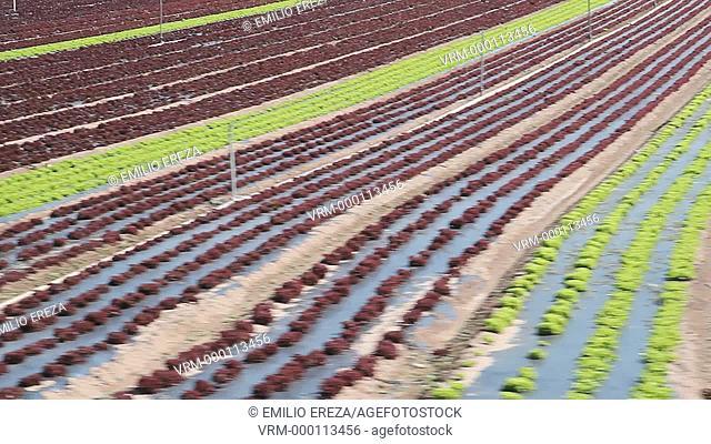 Organic vegetables for sale. Balaguer, Lleida, Catalonia, Spain