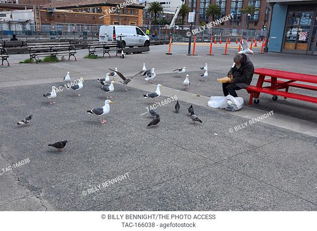 Views of a homeless man looking for food in a trashbag while pigeons and seagulls eagerly wait to steal food from him at the Embarcadero of the Port of San...