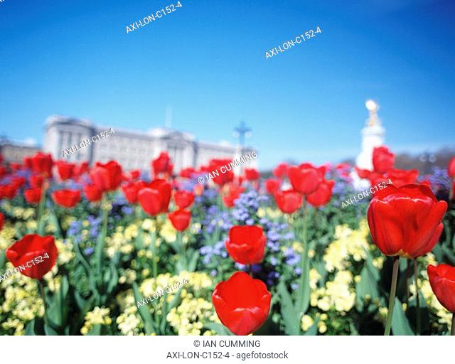 Looking through tulips to Buckingham Palace and the Queen Victoria Memorial