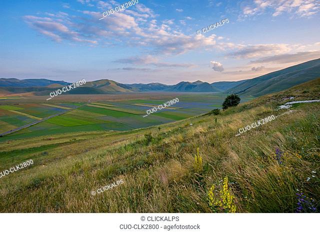 Blooming in Piano Grande of Castelluccio di Norcia, Monti Sibillini National Park, Umbria, Italy
