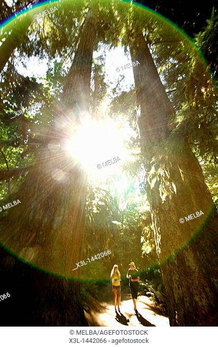 Cathedral grove  Vancouver island  British Columbia  Canada
