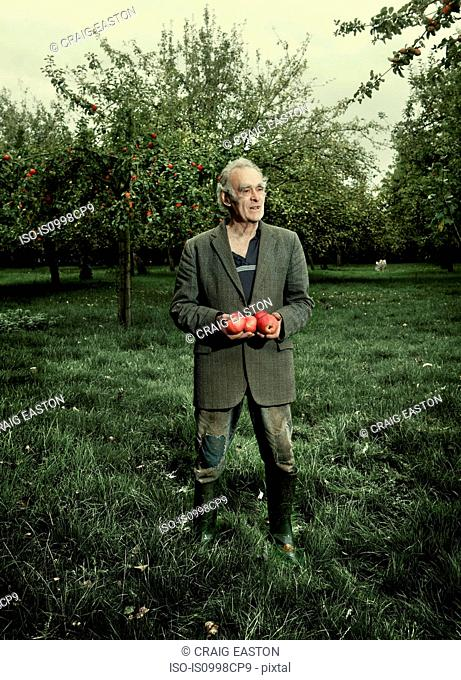 Senior man holding apples in orchard