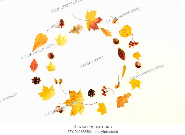 autumn leaves, chestnuts, acorns and berries frame