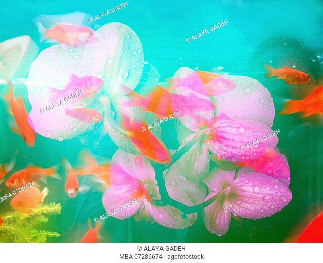Flowers and fish, composing