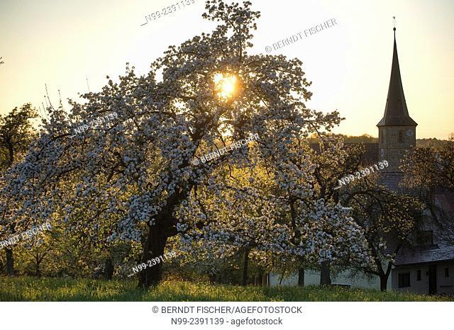Franconian village Hetzles, surrounded by orchards, spring, sunset, Franconia, Bavaria, Germany