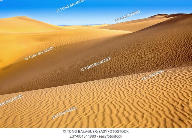 Desert sand dunes in Maspalomas Oasis Gran Canaria at Canary islands