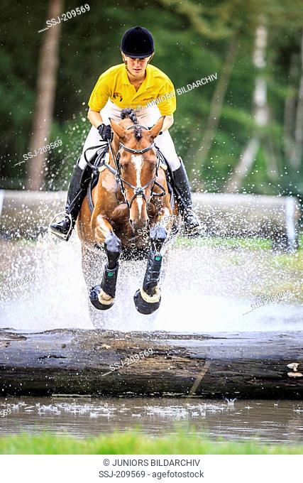 Irish Hunter. Rider with bay adult jumping out of water in a cross country course. Germany