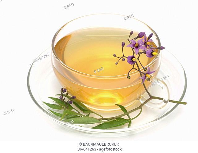 Bittersweet, Bitter Nightshade or Climbing Nightshade (Solanum dulcamara), herbal tea