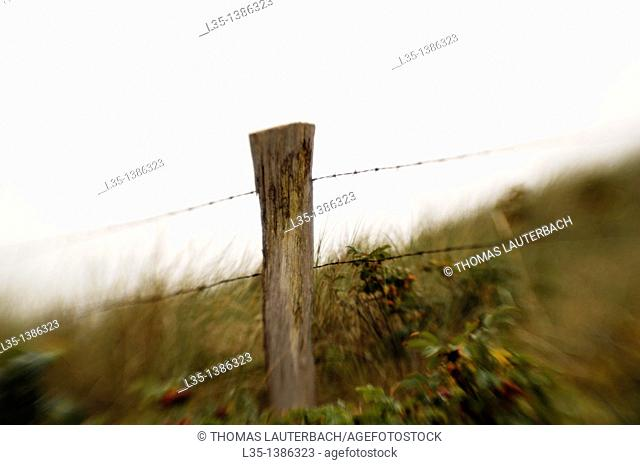 Part of an old barbed wire fence