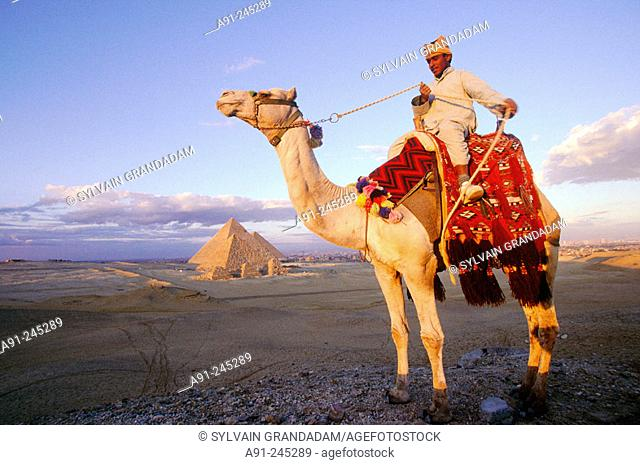Pyramids and camel. Gizeh. Egypt