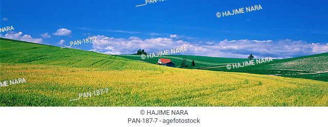 Country Scene with Farmfouse, Biei, Hokkaido, Japan, No Release