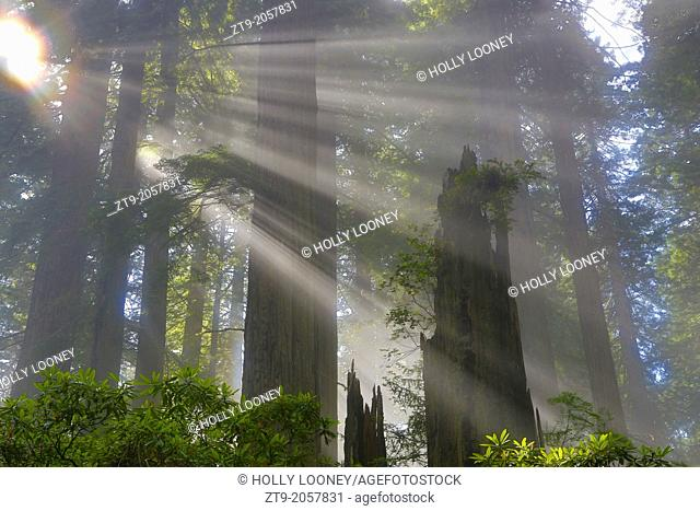 Rays of Light