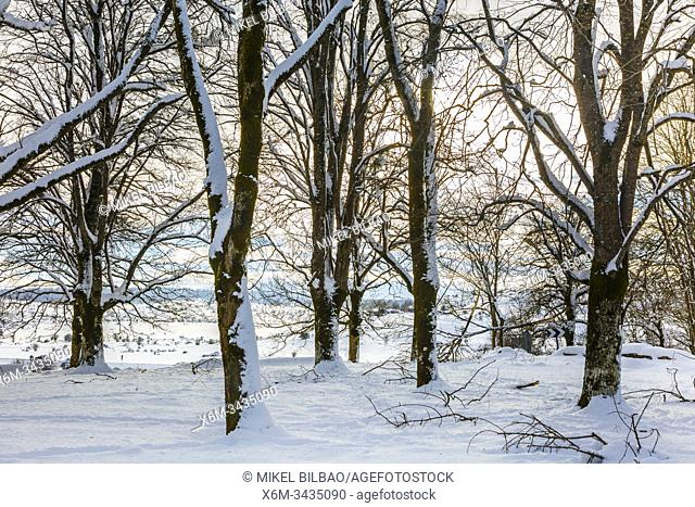 Trees in a snow-covered landscape. Urbasa-Andia Natural Park. Navarre, Spain, Europe