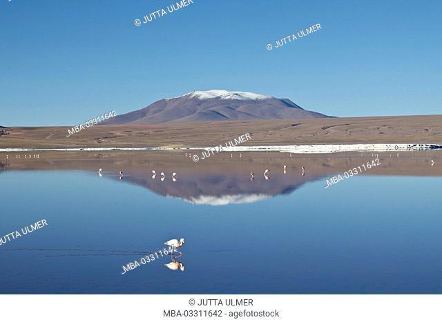 Bolivia, Los Lipez, Laguna Colorada