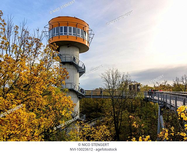 Treetop walkway in Hainich National Park, Thuringia, Germany