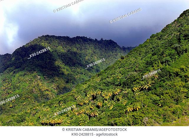 Green mountain slope, St Lucia, Windward Islands, Lesser Antilles, Eastern Caribbean Islands, West Indies, Americas