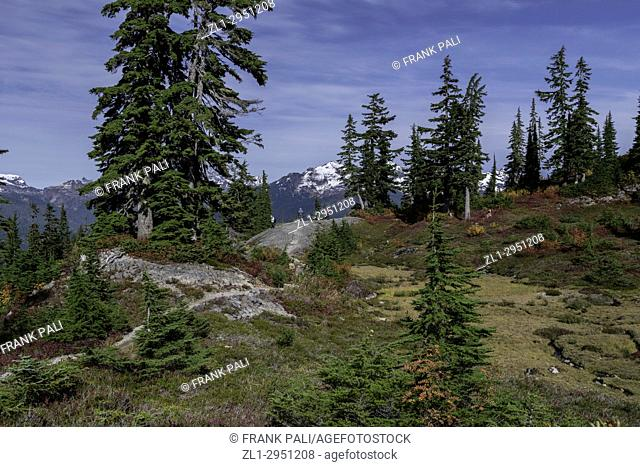WASHINTON-HIking trails at Mount Baker with a carpet of fall colours in the vegetation