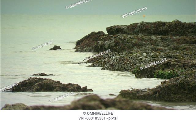 Seaweed covering rocks on beach