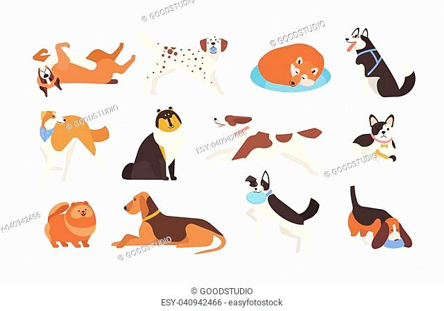 Collection of funny dogs of various breeds playing, sleeping, lying, sitting. Set of cute and amusing cartoon pet animals isolated on white background