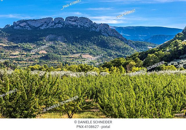 France, Drome, The Provencal Baronnies Regional Natural Park, rural landscape