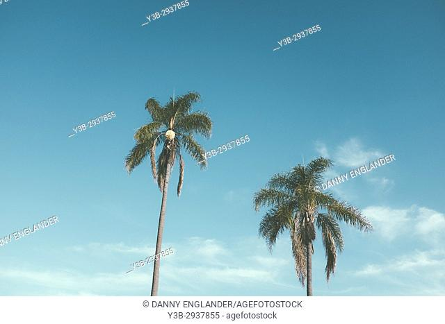 Two palm trees with a turquoise sky in the background in San Diego, CA