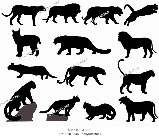 Collection of silhouettes of wild animals - the cat family