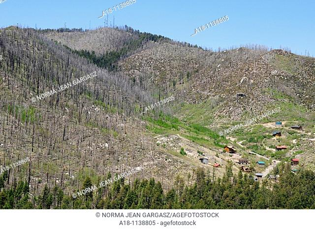 The remains of trees damaged or killed by the Aspen Fire of 2003 compromise the landscape on Mount Lemmon, a sky island near Tucson, Arizona