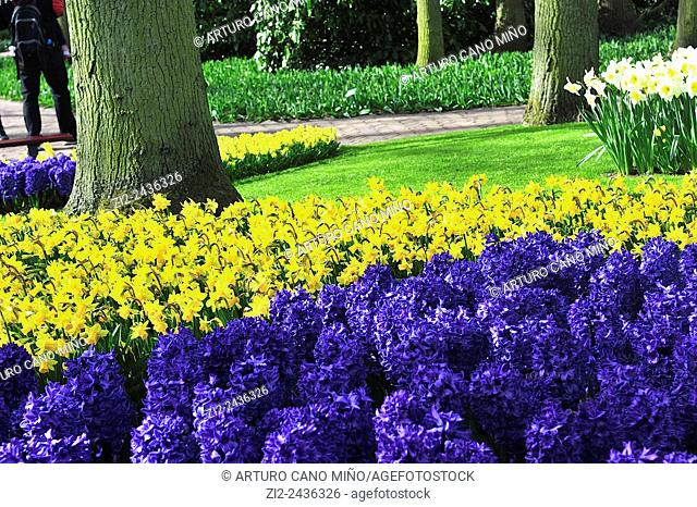 Park gardens. Keukenhof, Lisse, the Netherlands