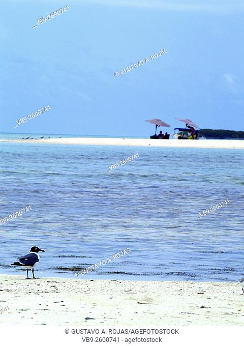 bella playa turistas y ave