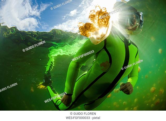 Oceania, Palau, Eik Malk, Female snorkeller watching spotted jellyfish, mastigias papua, in saltwater lake