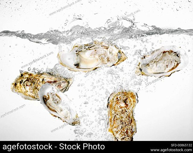 Oysters falling into water