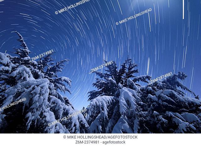 Moonlight illuminates snow covered trees in Nebraska as stars trail overhead, along with an iridium flare