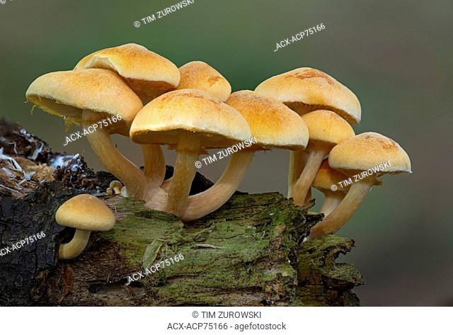 Unknown Mushroom Species - East Sooke Park, Sooke BC