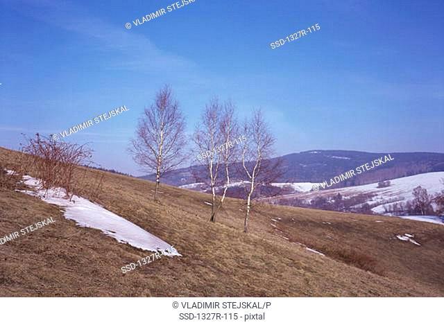 Snow on a hill, Czech Republic