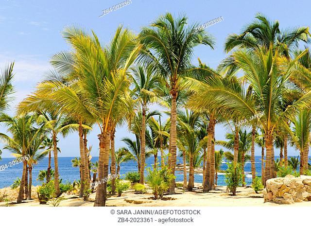 Playa de Chileno Bay beach, The Corridor, Cabo San Lucas, Baja California, Mexico, North America