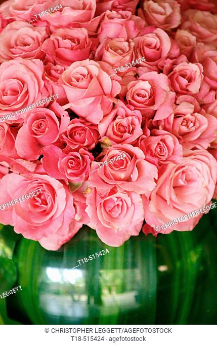 Pink roses in vase, close-up