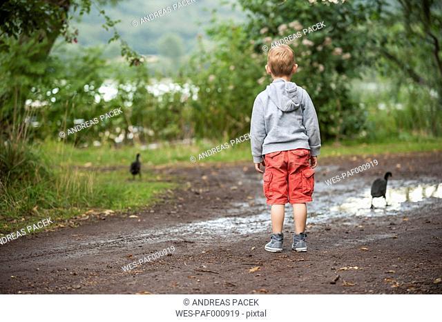 Germany, Rhineland-Palatinate, Laacher See, boy looking at two ducks