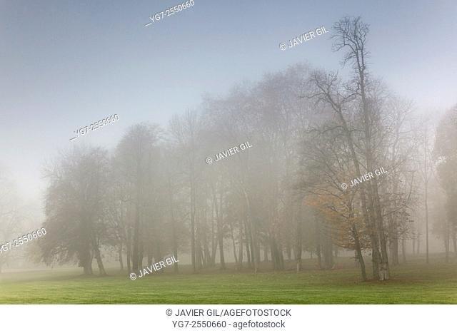 Fog in Chamarande, Essonne, Ile-de-france, France