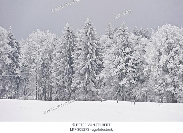 Winter scenery, Tegernseer Land, Upper Bavaria, Germany