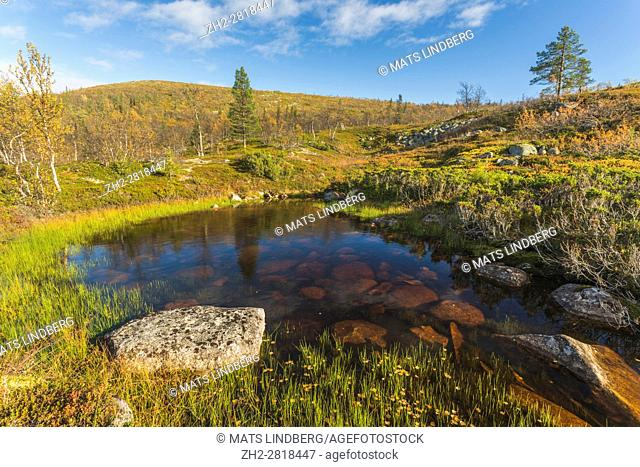 Landscape in autumn season, nice orange and red colors, yellow birch trees, mountain in background, small pool of water, Gällivare, Swedish Lapland, Sweden