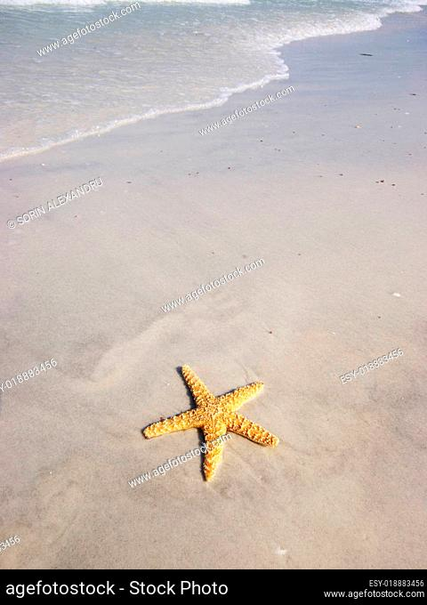 Starfish on the beach with fast approaching surf